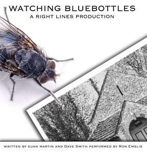 Watching Bluebottles